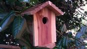 SecureGuard HD 4G Birdhouse Spy Camera/DVR