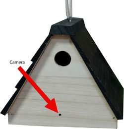 Bush Baby Stealth Hi-Def Bird House Spy Camera/DVR